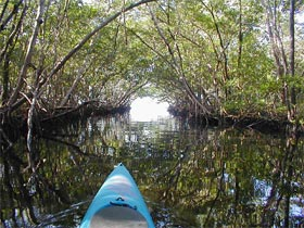 Kayaking in south Florida