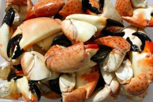Stone crab claws (chelae), which are large and strong enough to break an oyster's shell, are considered a delicacy.